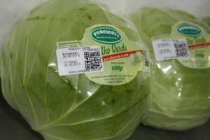 - Repolho verde | Hortaliças Percicoti